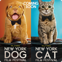 Cat & Dog Film Festival